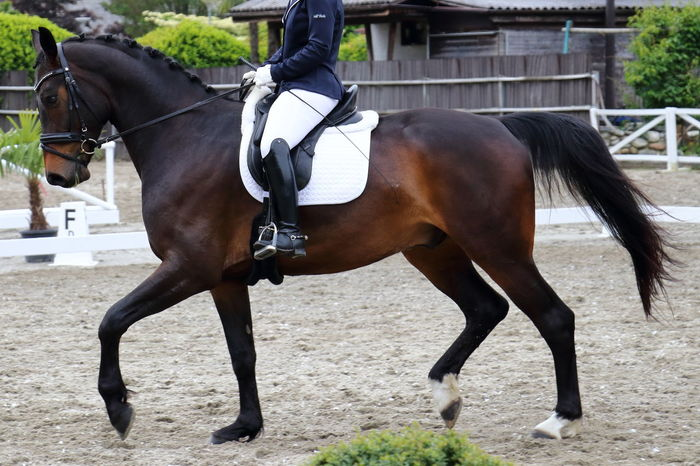 Competizione di Dressage Dressage Dressage Competition Animal Themes Bridle Brown Competition Day Domestic Animals Herbivorous Horse Horse Racing Horseback Riding Jockey Livestock Mammal One Animal Outdoors Working Animal Second Acts Be. Ready.