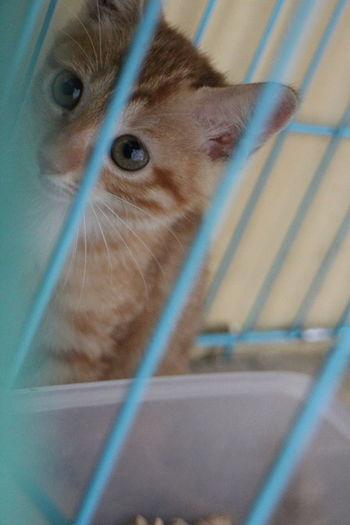 My Lovely Neighbor- Cat