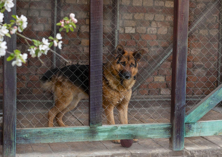 View of dog in cage