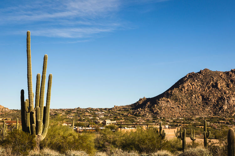 Desert landscape in Scottsdale, Arizona. Scottsdale, AZ Arid Climate Beauty In Nature Cactus Day Growth Landscape Mountain Nature No People Outdoors Plant Saguaro Cactus Scenics Sky Tranquil Scene Tranquility