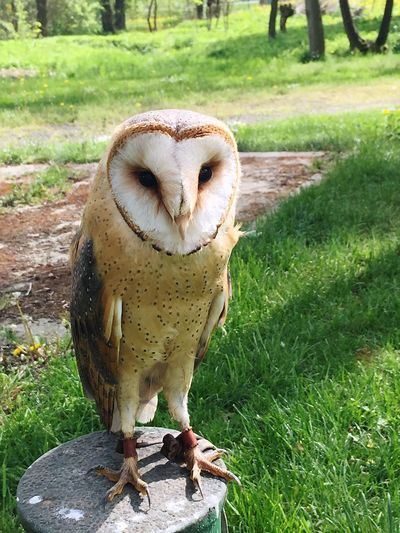 Animal Owl Sunny Sunnyday Summer Taking Photos Enjoying Life Nature Relaxing