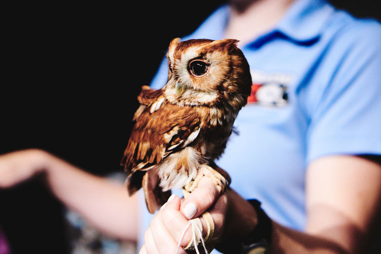 OWL GIRLLLL Animal Wildlife Animals In The Wild Beak Bird Bird Of Prey Close-up Day Domestic Animals Focus On Foreground Holding Human Body Part Human Hand Livestock Mammal Men One Animal One Person Outdoors Owl Owls People Pets Real People Young Animal Young Bird Fresh On Market 2017