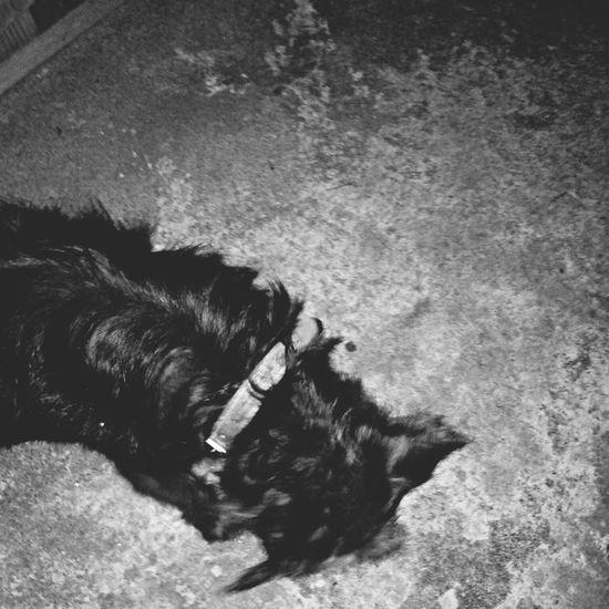 Mydog♡ IsMyLife Baby MyLove❤