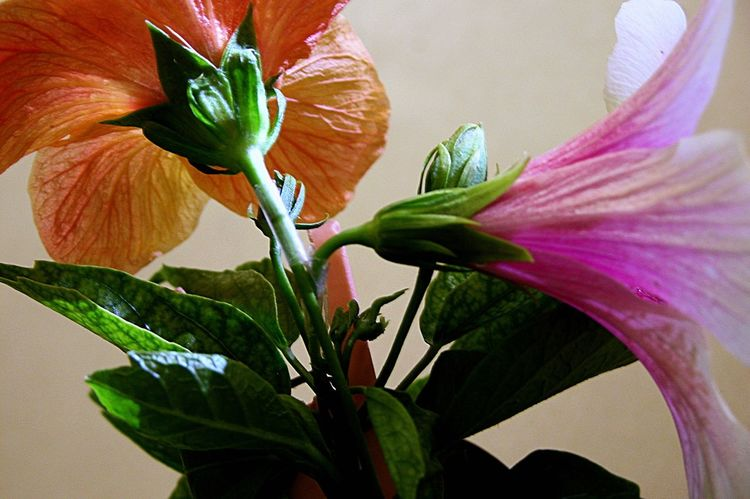 Spring Into Spring Flowers From My Garden EyeEm Flower Hibiscus 🌺