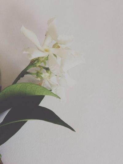 My neighbour's jasmine plant smells so good