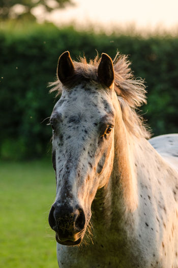 Close up of horse on field