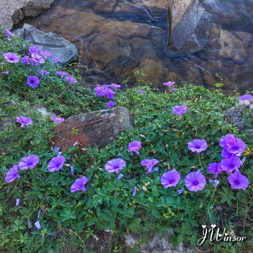 Some of the vegetation on the Sunshine Coast Flower Purple Wildflower Waterfront