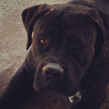 My Dog Leon Love