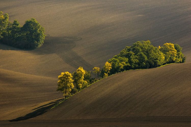 Abandoned trees in the waves of brown fields