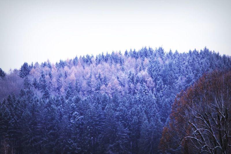 Happy winter ;)