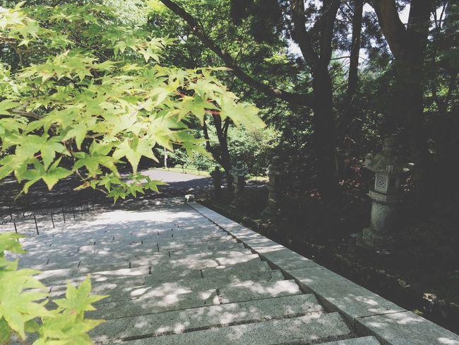 比叡山 延暦寺 Hieizan Enryakuji