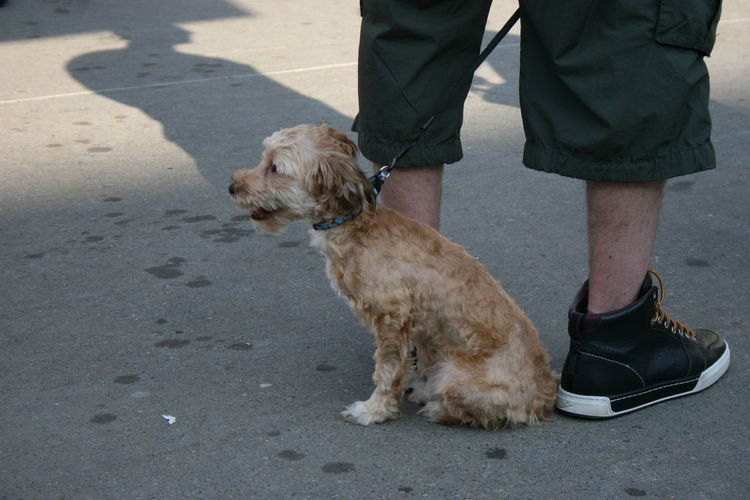 Low Section Of A Man With A Dog