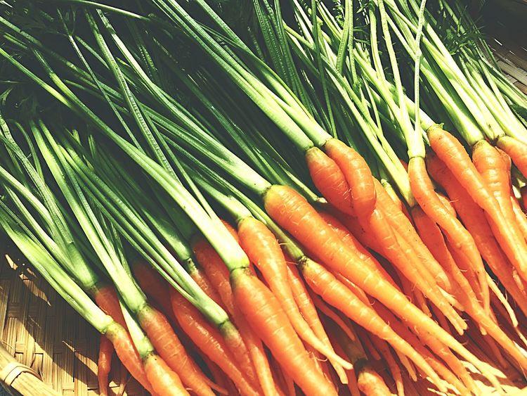 ♪~(´ε` ) The Five Senses だからどうした? Hello World Enjoying Life Vegetable Vegetables Carrot