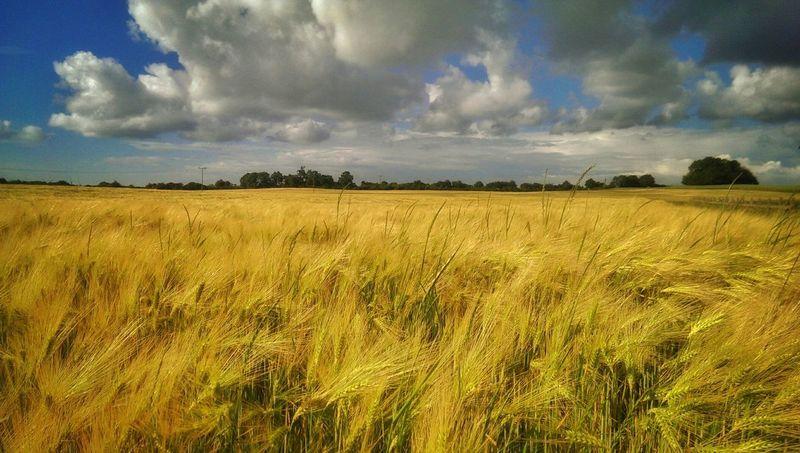 Summertime Crops