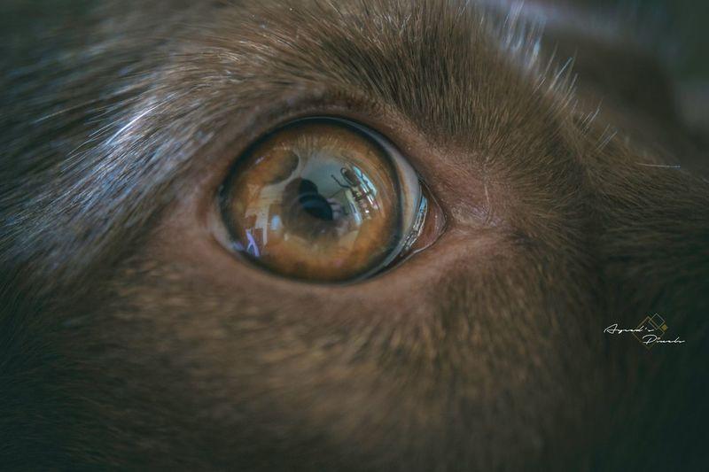 Ayceds_Pixels Sony35mmf3.5 A6300 Pets Portrait