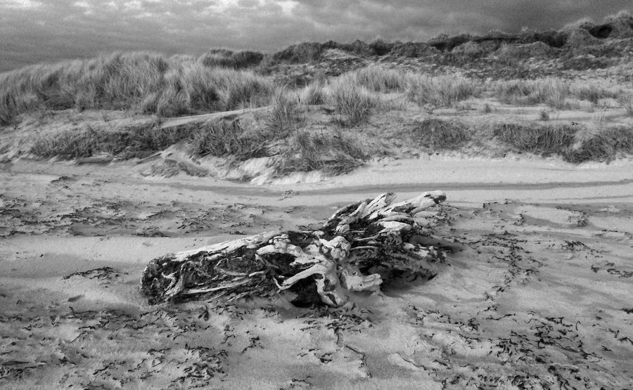 Beach Black And White Driftwood HDR IPhoneography Log Marram Grass Nature Outdoors Outer Hebrides Sand Sandy