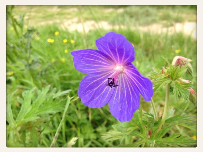 Flowers Purple from England