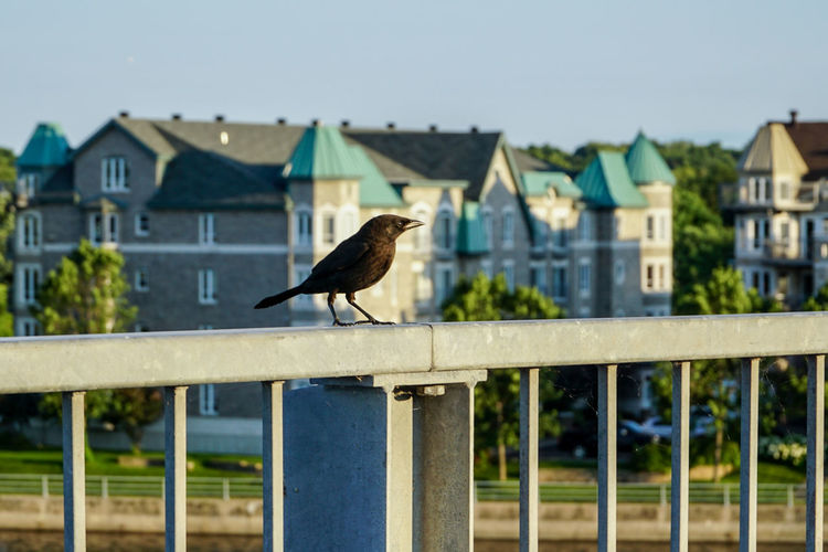 Bird perching on railing