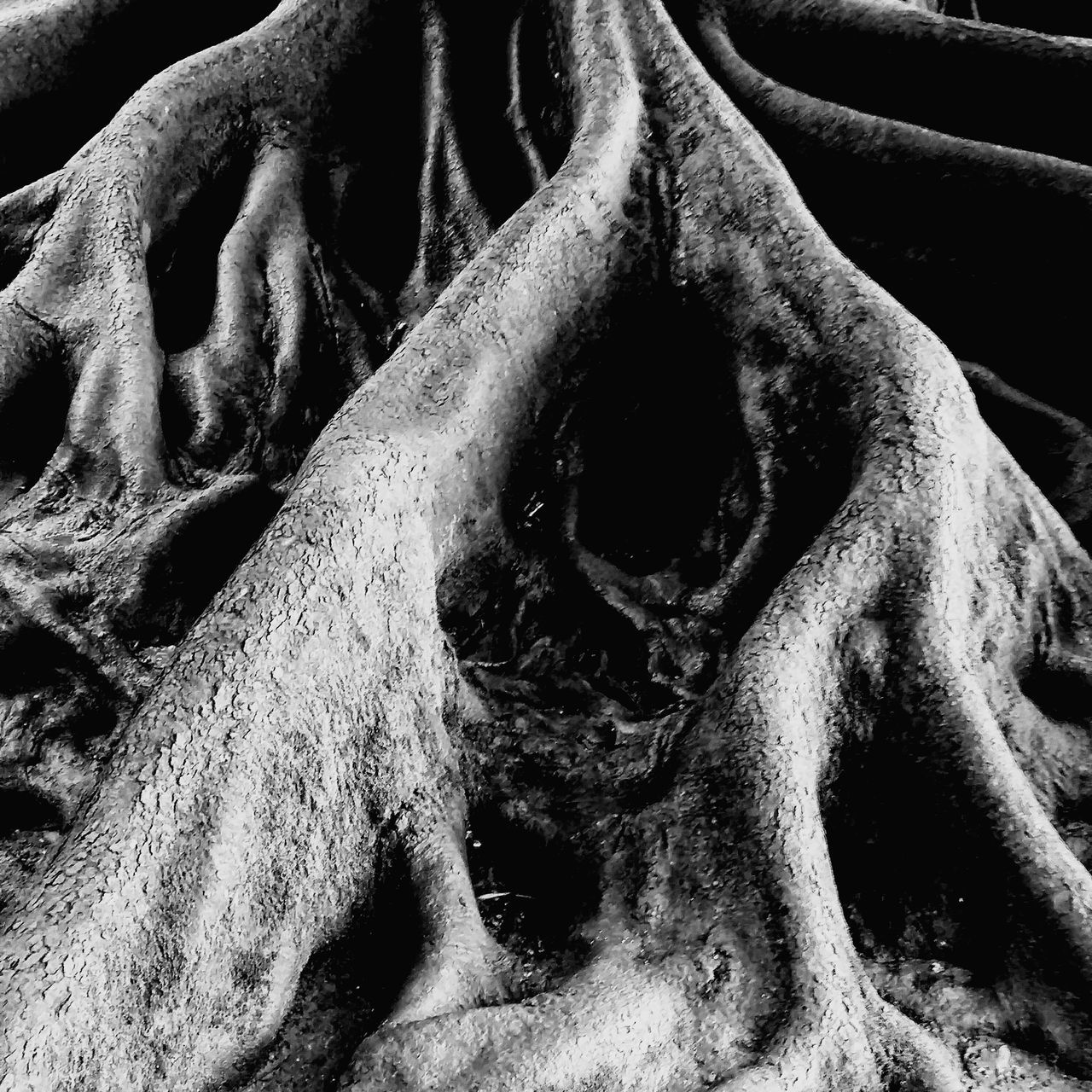no people, close-up, full frame, backgrounds, dirt, old, plant, day, root, nature, dirty, weathered, decline, tree, strength, metal, outdoors, plant part, pattern, run-down
