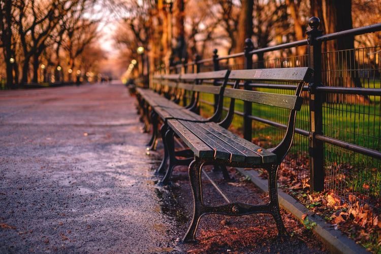 Empty Benches In Park During Autumn