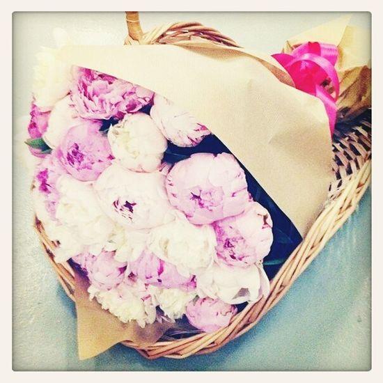 Relaxing Followme Cute Flowers