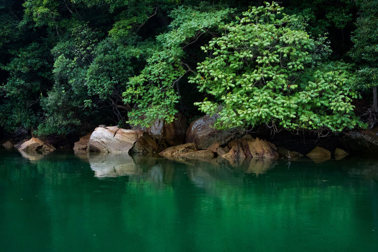 Green Green Color Tree Beauty In Nature Day Nature No People Outdoors Reflection Rock - Object Sea Tranquil Scene Tree Water