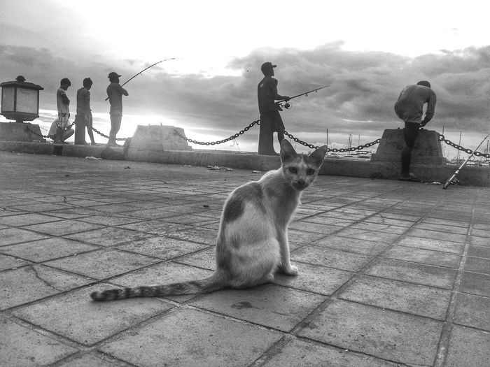 What are you looking Cat ? An old photo i refurbished for practice. Outdoors EyeEmBestEdits Colors . This was taken during a Photowalk . Ordinary day with a little Change Of Scenery . Animal In The City Explore Manila Bay, Philippines EyeEm Best Shots Eyeem Philippines