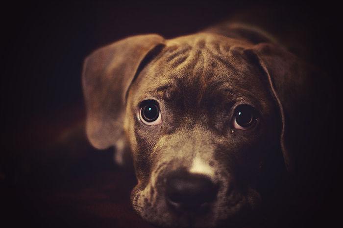 Dog Love Dogs Pet Pet Photography  Pet Portrait Pets Puppy Puppyeyes