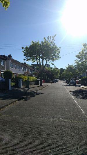 Street No People Tree Outdoors Day Sky Nature Tree Road Growth Sunlight Tranquility Raheny Like4like Ireland