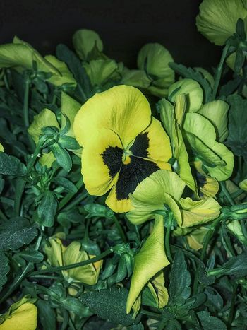 Flower Freshness Green Color Leaf Nature Petal Fragility Growth Beauty In Nature No People Flower Head Close-up Healthy Eating Outdoors Food Day