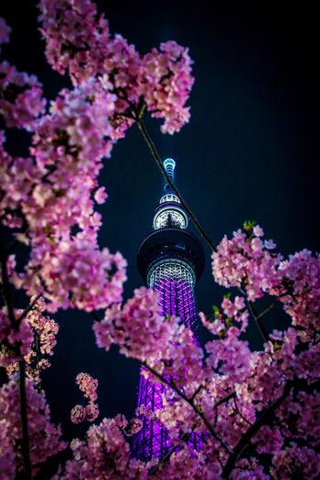 #tokyoskytree