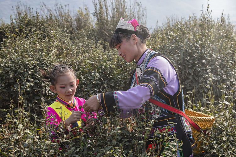 Yiliang, China - March 24, 2019: Black Yi woman and her daughter dressed in a traditional attire picking up tea leaves in Baohong mountain, Yiliang in Yunnan Yiliang Kunming, China Tea Tea Leaves Tea Harvesting Yi Minority Ethnic Group China ASIA Tea Garden Tea Production Tea Processing Puer Tea Oolong Tea