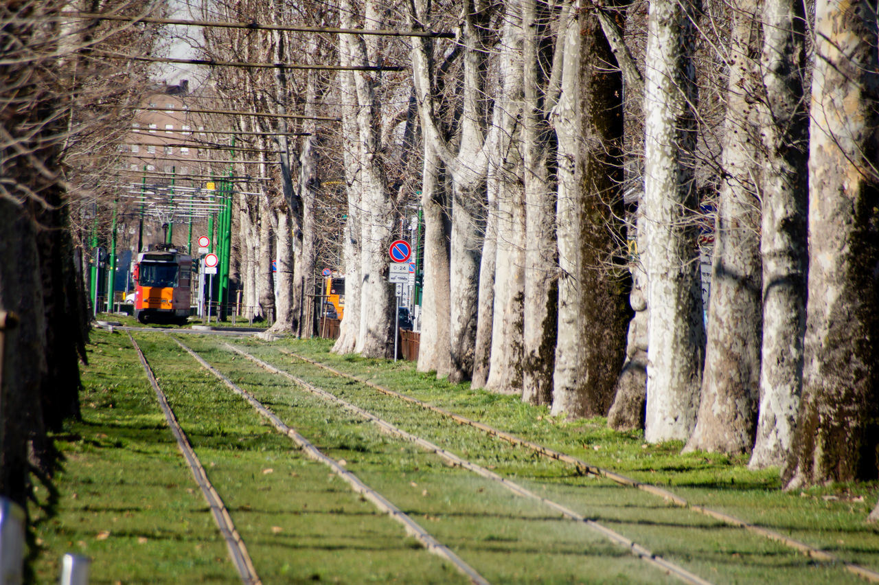 Train On Railroad Track Amidst Trees During Sunny Day