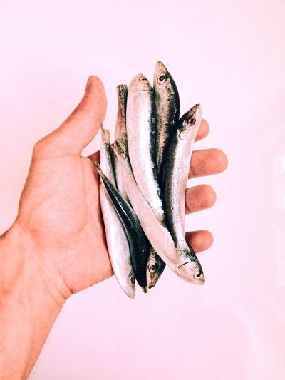Cropped image of man holding sardines against white background