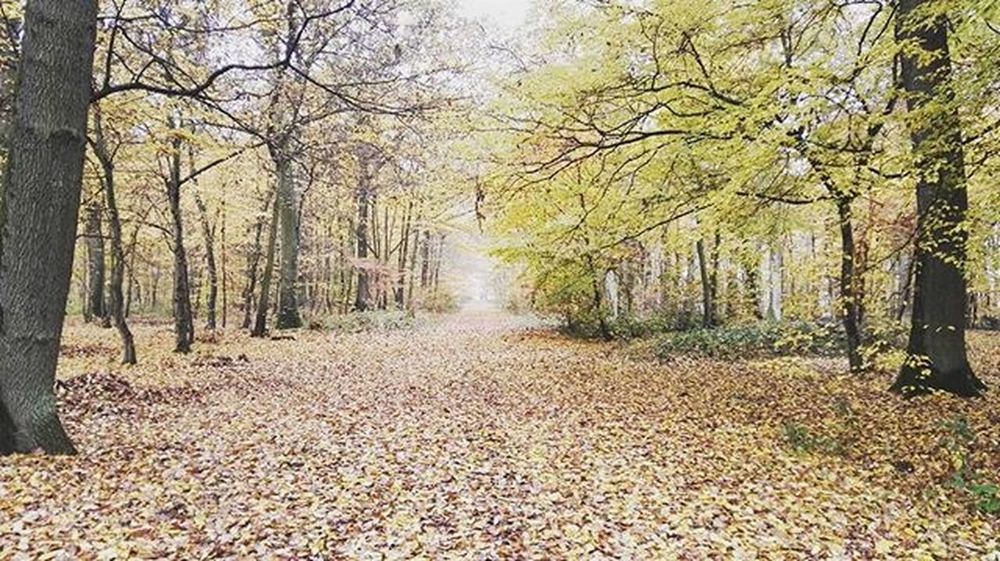 Automne Couleur Bois Roussylevillage Moselle Lorraine Huawei Huaweishot HuaweiP8 Huaweidevicefrance Picoftheday