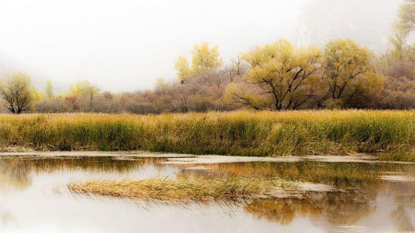 门头沟秋色2! Tree Beauty In Nature Landscape Water Beijing, China Countryside Fog