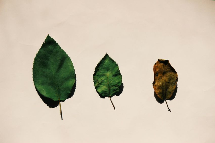 Someday everything in this world will fading Leafage Faded Faded Leafage Tree Trees Like Comment Follow Follow Me