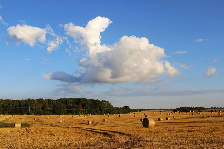 Agriculture Bale  Beauty In Nature Blue Cloud Cloud - Sky Crop  Field Grass Growth Hay Hay Bales Horizon Over Land Landscape Nature No People Outdoors Remote Rural Scene Scenics Sky Tranquil Scene Tranquility Tree Village