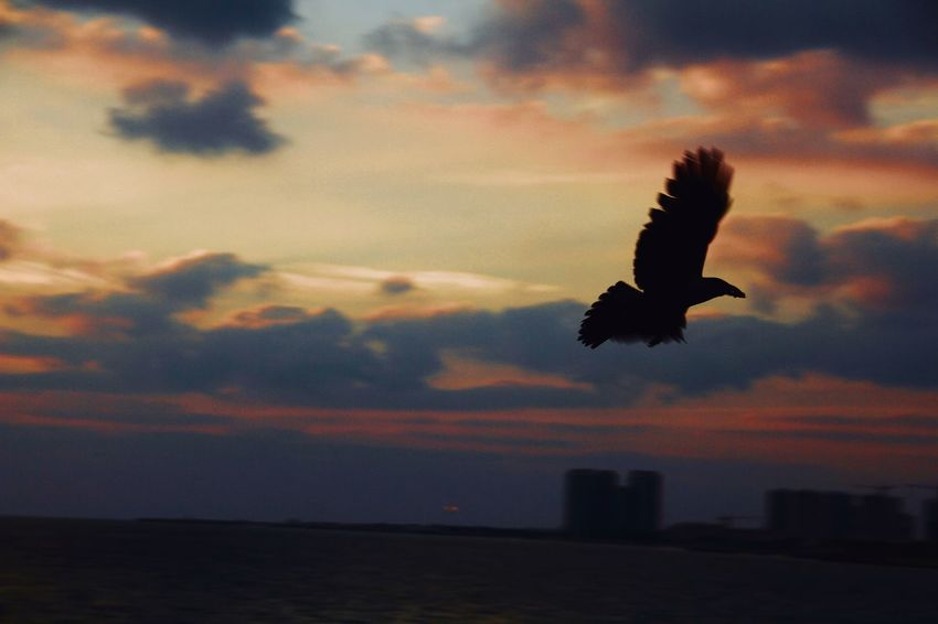 A Bird Sirkingly Clouds Sunset Sky Cloud - Sky Animal Animal Themes Vertebrate Animals In The Wild Animal Wildlife Silhouette Bird Nature Scenics - Nature