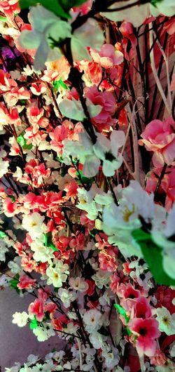Flower Leaf Backgrounds Full Frame Change Autumn Red Close-up Plant