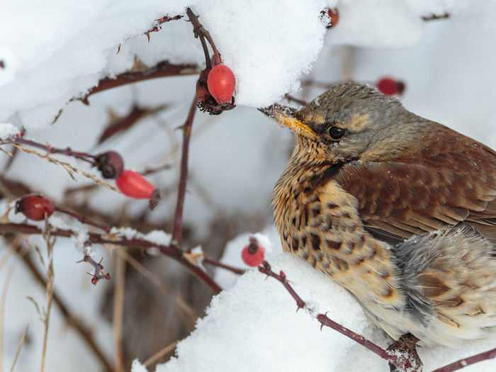 Close-up of bird perching on snow covered tree