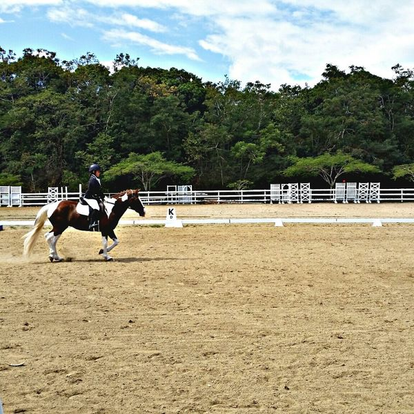 Paula. Kids Children Stepdaughther Humacao Faces Of EyeEm People Puerto Rico Twins Horses Competition