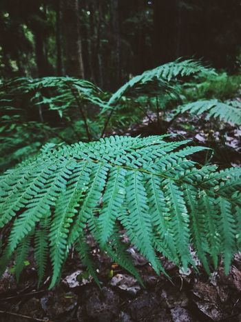 Green Color Growth Nature Fern Plant Leaf Green Color Green