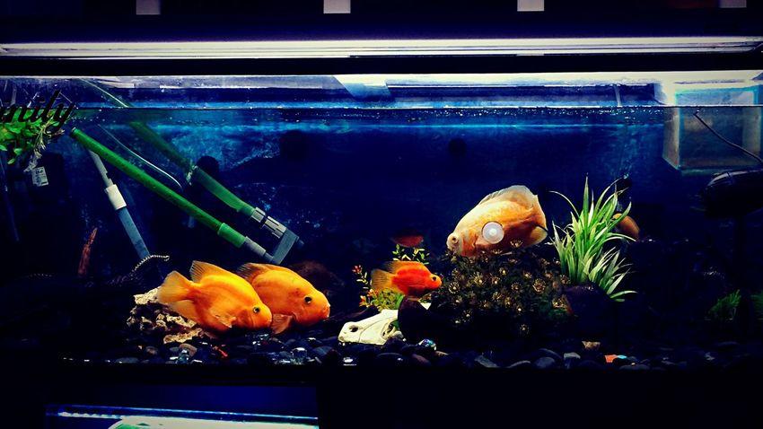 🐠🐠🐠 Tropical Fish First Eyeem Photo
