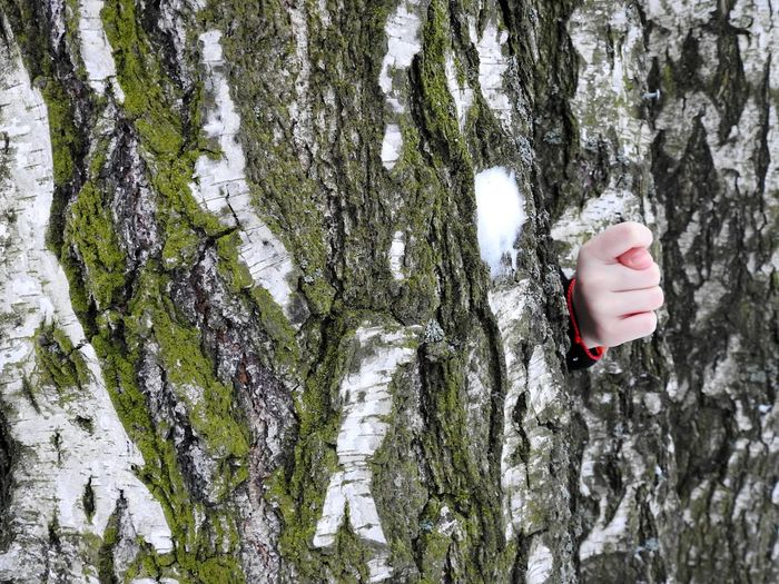 Hand behind tree trunk