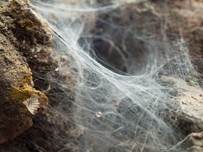 Close-up of spider web on rock