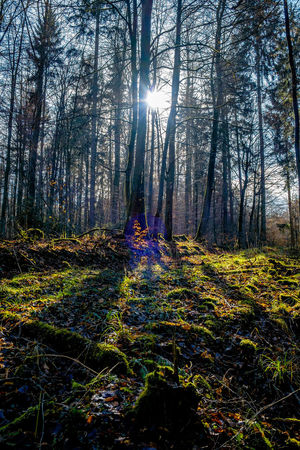 Not yet spring - but beautiful nonetheless Autumn Beauty In Nature Day Forest Growth Hiking Landscape Lensflare Nature Outdoors Scenics Sky Sun Sunbeam Sunlight Tranquility Tree Tree Trunk WoodLand