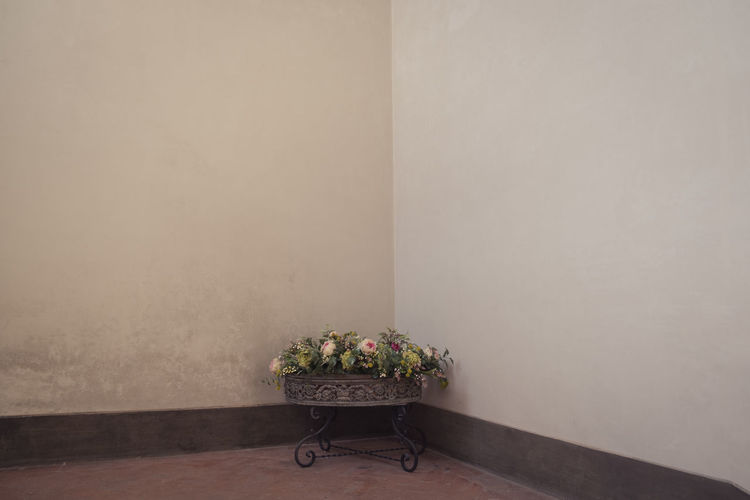Still life potted plant against wall