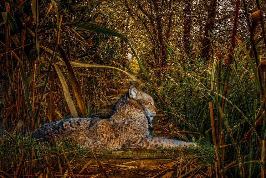 If you don't follow your heart, you might spend the rest of your life wishing you had... My Favourite Photo One Animal Animal Themes Animals In The Wild Relaxation Lying Down Mammal Outdoors Nature Day Grass Growth No People Tree