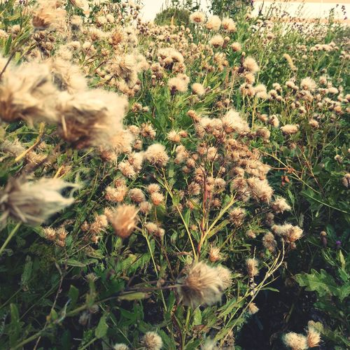 Nature Growth Plant Uncultivated Outdoors Day No People Beauty In Nature Fragility Flower Close-up Freshness